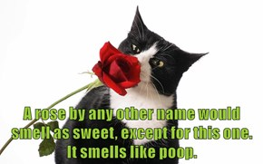 A rose by any other name would smell as sweet, except for this one.            It smells like poop.
