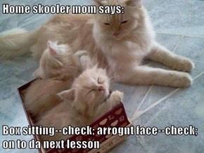 Home skooler mom says:  Box sitting--check; arrognt face--check; on to da next lesson