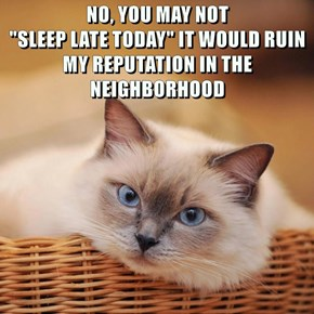 """NO, YOU MAY NOT                                          """"SLEEP LATE TODAY"""" IT WOULD RUIN MY REPUTATION IN THE NEIGHBORHOOD"""