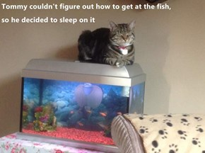 Tommy couldn't figure out how to get at the fish,                              so he decided to sleep on it