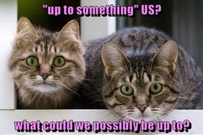 """""""up to something"""" US?  what could we possibly be up to?"""