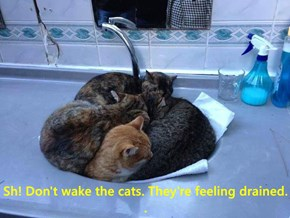 Sh! Don't wake the cats. They're feeling drained.                                                                                .