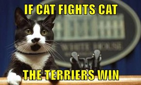 IF CAT FIGHTS CAT