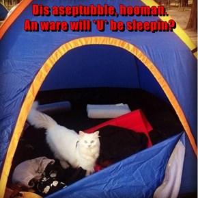 Dis aseptubble, hooman.                        An ware will *U* be sleepin?