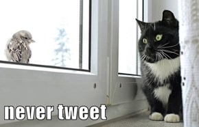 never tweet