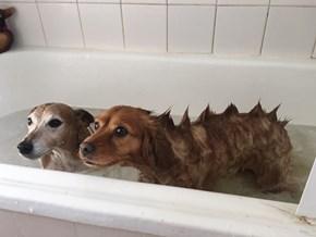 Doggosaurus!