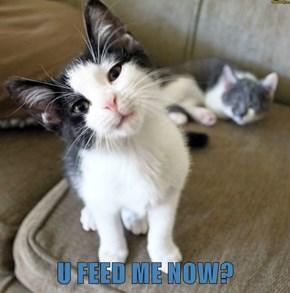 U FEED ME NOW?