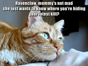 Ravenclaw, mommy's not mad                                          she just wants to know where you're hiding your latest kill?