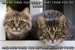 WHERE HAVE YOU BEEN? WHAT TOOK YOU SO LONG?  AND HOW DARE YOU RETURN WITHOUT FOOD!