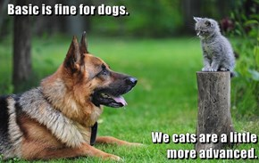 Basic is fine for dogs.  We cats are a little                                                                              more advanced.