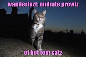 wanderluzt: midnite prowlz  of hot tom catz