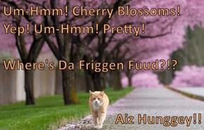 Um-Hmm! Cherry Blossoms! Yep! Um-Hmm! Pretty! Where's Da Friggen Fuud?!? Aiz Hunggey!!