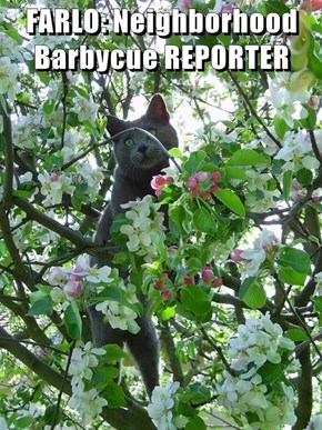 FARLO: Neighborhood Barbycue REPORTER