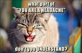 "what part of                                                                                           ""YOU ARE A HEADACHE""              don't you UNDERSTAND?"