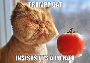 TRUMPY CAT  INSISTS IT'S A POTATO