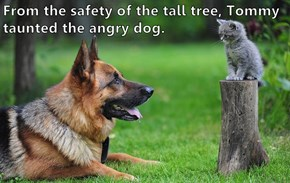 From the safety of the tall tree, Tommy taunted the angry dog.