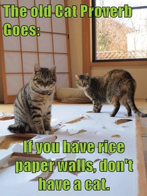 The old Cat Proverb