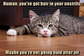 Human, you've got hair in your nostrils.  Maybe you're not going bald after all