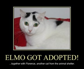 ELMO GOT ADOPTED!
