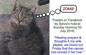 Sylvia update, Sunday 03 July 2016 (via hubcat)