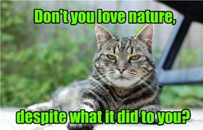 Snarky Cat Is Quite Snarky
