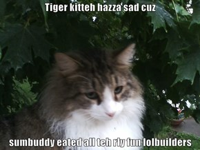 Tiger kitteh hazza sad cuz  sumbuddy eated all teh rly fun lolbuilders