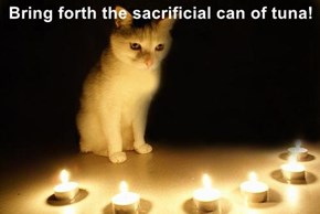 Bring forth the sacrificial can of tuna!