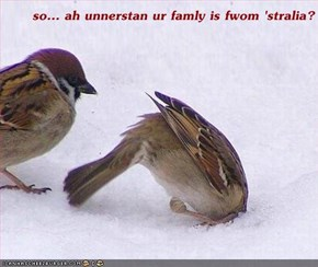 so... ah unnerstan ur famly is fwom 'stralia?
