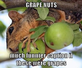 GRAPE NUTS  much funnier caption if                   these were grapes