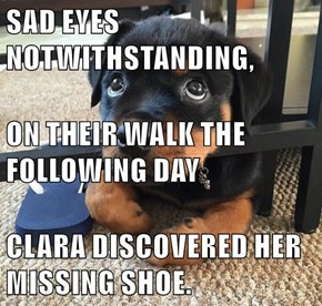 SAD EYES NOTWITHSTANDING, ON THEIR WALK THE FOLLOWING DAY CLARA DISCOVERED HER MISSING SHOE.