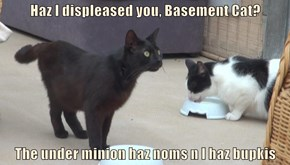 Haz I displeased you, Basement Cat?  The under minion haz noms n I haz bupkis