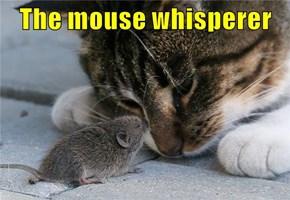 The mouse whisperer