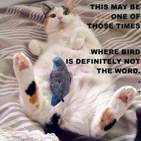 THIS MAY BE                                           ONE OF                                    THOSE TIMES WHERE BIRD                                          IS DEFINITELY NOT                                     THE WORD.