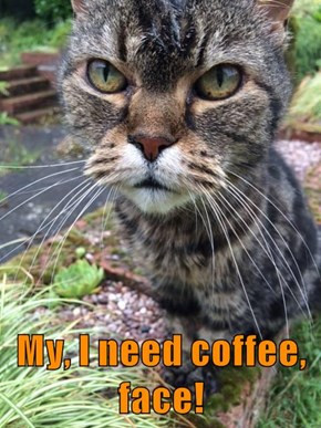 My, I need coffee, face!