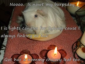 Noooo.  Is nawt my burpsday. I is lights candles for Sylvaig cause I always finking ov hur.   Got hur a nommy chicory leaf too.