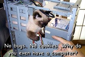 No bugs. No cookies. Why do you even have a computer?