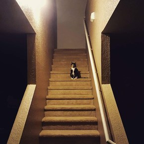 Basement Cat Wishes to See You Now