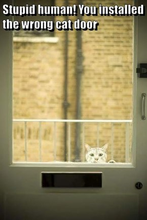 Stupid human! You installed the wrong cat door