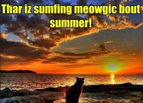 Thar iz sumfing meowgic bout summer!