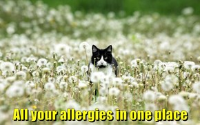 All your allergies in one place