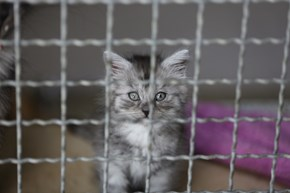 Please Let Me Out!