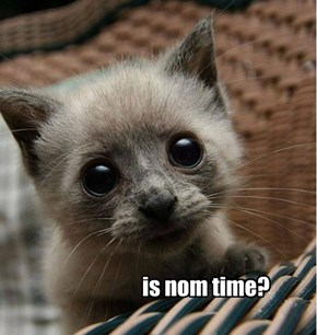 is nom time?