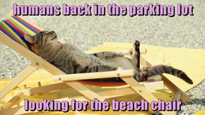 humans back in the parking lot  looking for the beach chair