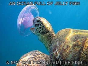 AN OCEAN FULL OF JELLY FISH  & NOT ONE PEANUT BUTTER FISH