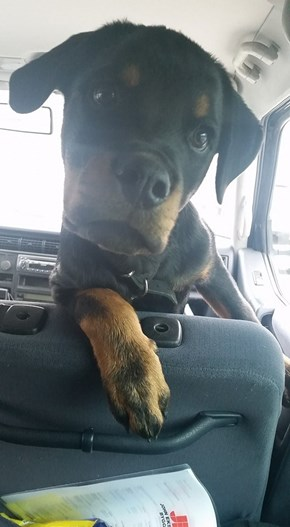 You said we could go to the park!