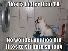 This is better than T.V.  No wonder our hoomin likes to sit here so long