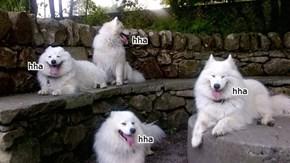 fun dogs