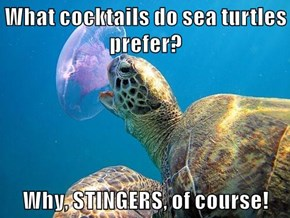 What cocktails do sea turtles prefer?  Why, STINGERS, of course!
