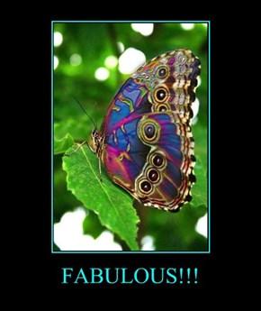 FABULOUS!!!