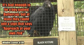 Life Ain't Easy for a Vulture Named Buttercup